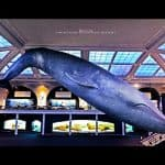 Expand Your Horizons at NYC's Natural History Museum