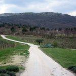 Provence at Your Pace: A Driving Tour