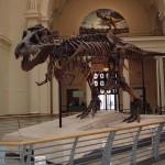Chicago's Field Museum Amazes Families