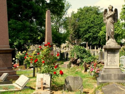 Well-tended roses at Kensal Green cemetery in London