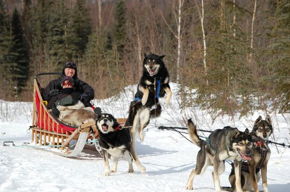 Learn How to Dog Sled - The Traveler's Way