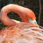 Photo Friday:  Flamingo at Miami Seaquarium