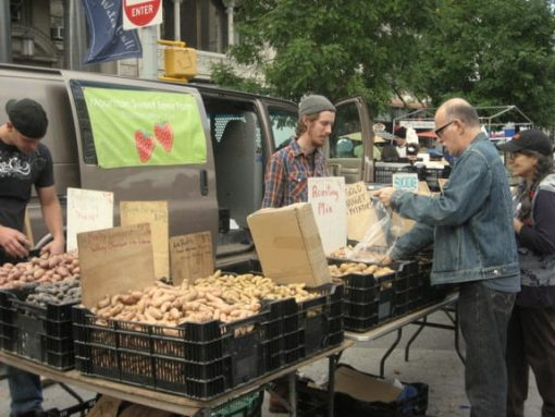 Union Square Greenmarket in NYC (photo by Tui Snider)