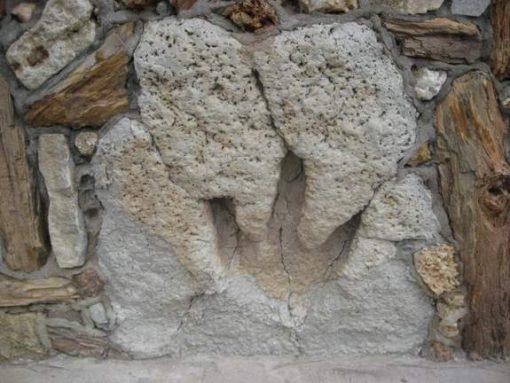 Texas dinosaur footprint (photo by Tui Snider)