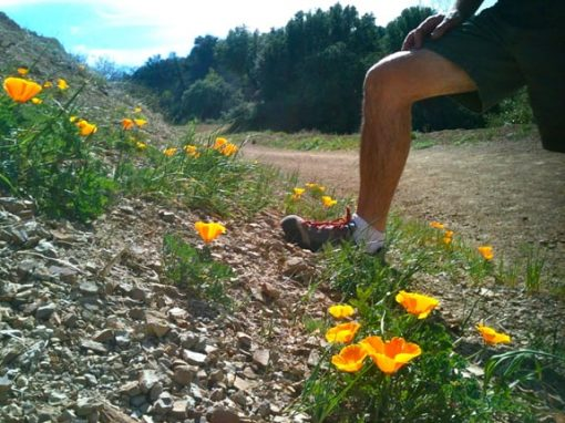 Hiking May Not Be The First Thing On Your List Of Things To Do In Los Angeles But It Should With Diversity Terrain Wildflowers