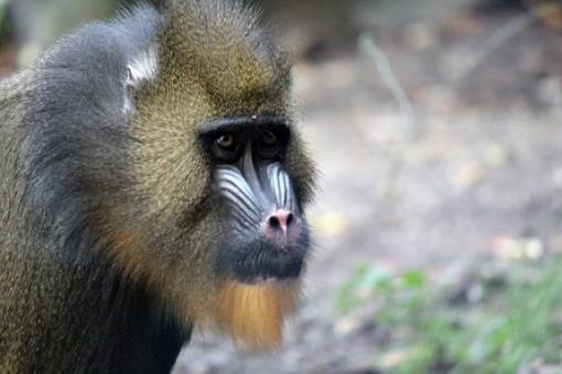 Bronx zoo resident