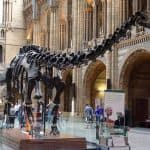 Diplodocus replica at Natural History Museum, London.