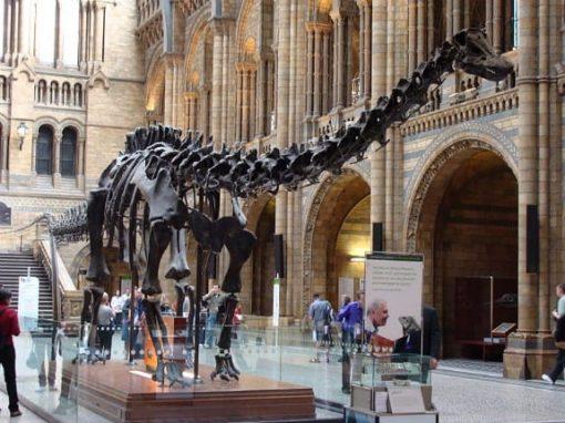 Diplodocus replica at Natural History Museum, London.