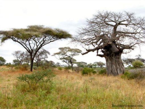 Tarangire, Tanzania, Africa