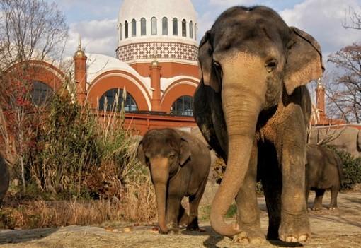 Elephant House 1