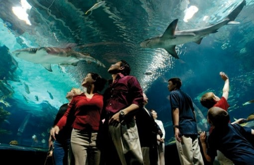 Shark_Tunnel 1