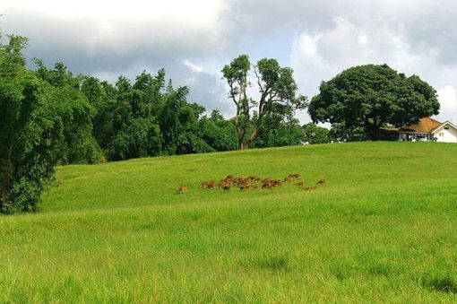 nature-of-south-india