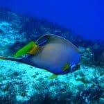 Cozumel Scuba Festival Adds Routes for Advanced Divers