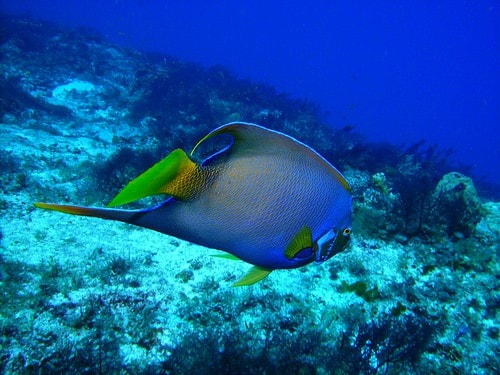 diving in cozumel photo