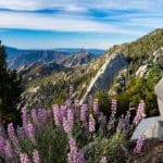 The 10 Most Beautiful Hikes in Greater Palm Springs