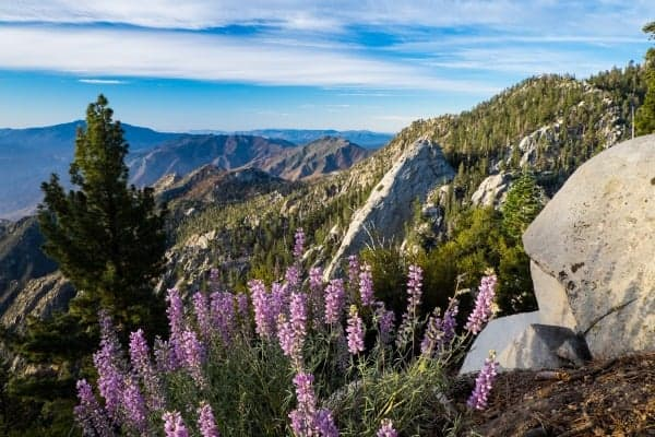The 10 Most Beautiful Hikes In Greater Palm Springs The