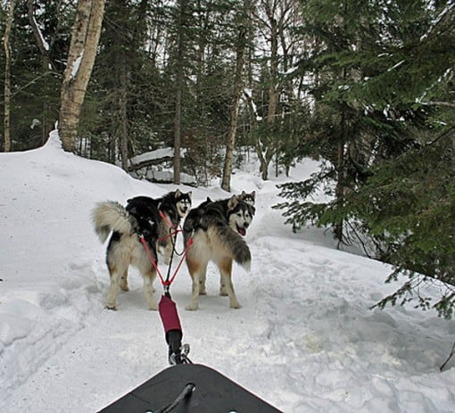 dogsled 1