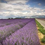 10 Thing to Do in Provence, France