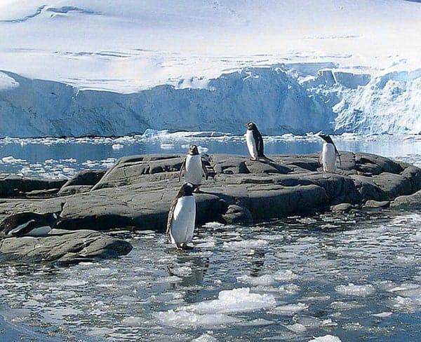 penguins-rocks_edited-1