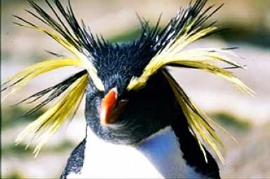 polarcruises-penguin