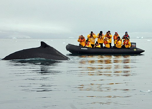 Whale watching - Quark Expeditions