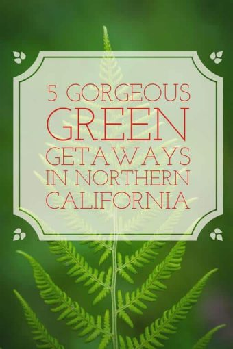 We've listed some of the best green getaways from San Francisco so that you can find your sanctuary and experience some of the best that nature has to offer.