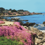 Top Spots to See Wildflowers in Monterey County
