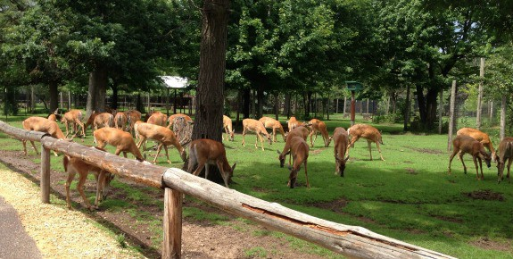 Experience Animal Adventures at Interactive Parks