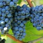 Grapevine's Urban Wine Trail Celebrates Texas Wine