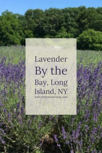 Whether it is the lure of the fragrant lavender, the salty sea oysters or the flavorful wines, a day exploring Long Island's North Fork is a day well spent.