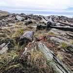 Top 10 Things to do on San Juan Island