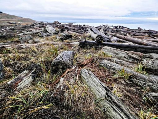 Driftwood beach on san juan island