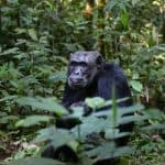 8 Wonderful Nature Experiences to Have in Uganda