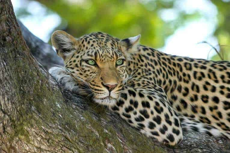 Nine Safari Tips For a Memorable African Vacation