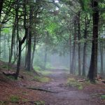 Hiking in Canada: Top 5 Trails for Fall Hiking