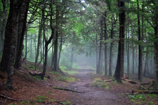 misty morning in the trees in fundy national park