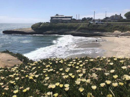 Sunny Cove Beach in Santa Cruz via Mimi McFadden